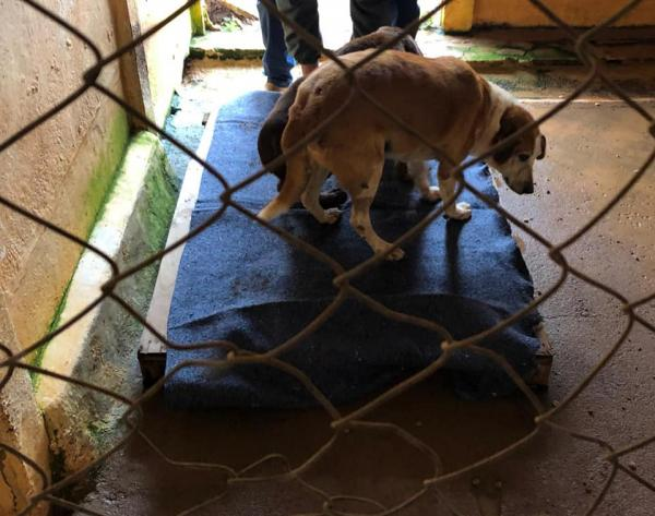 Prefeitura toma medidas preventivas para aconchegar animais do canil