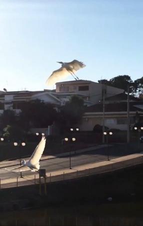 Prefeitura implanta corredor ecológico no Parque das Águas